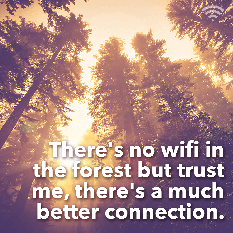 no-wifi-forest